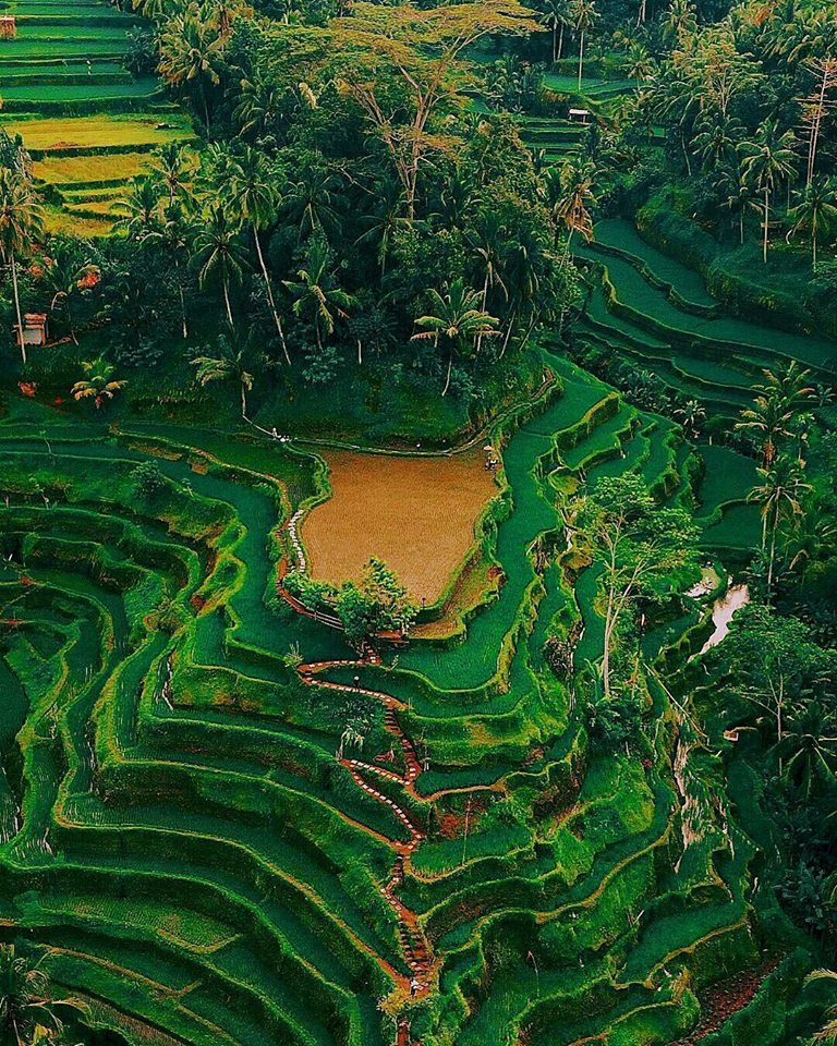 Exotic Indonesia. Tailor-made tours and travel itineraries all around Indonesia. Tailor-made holidays in Indonesia