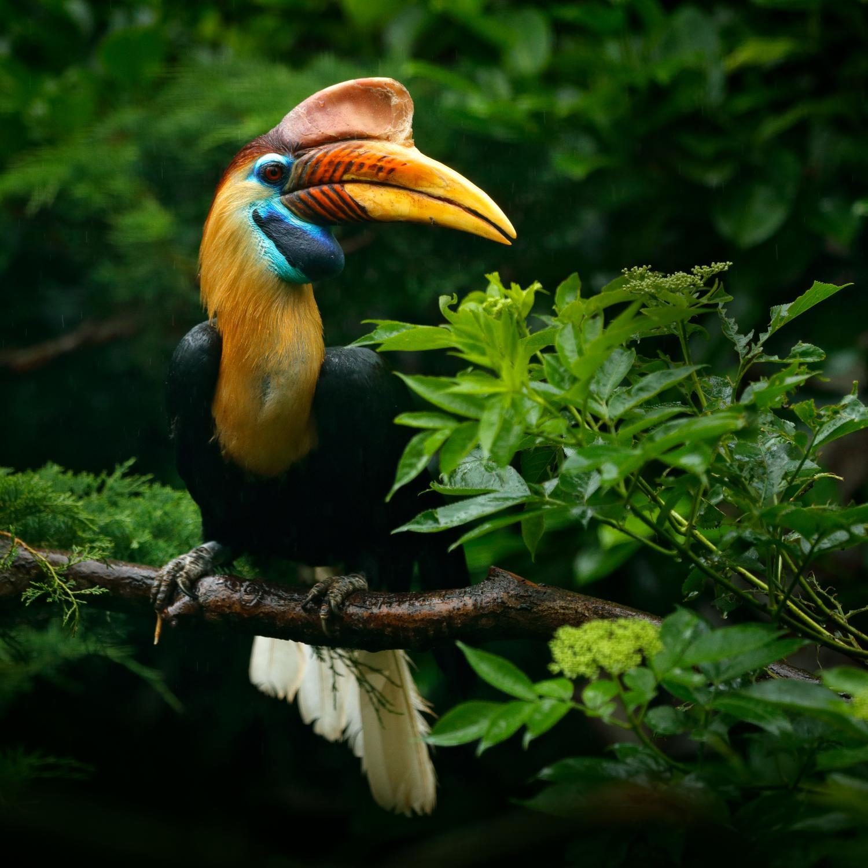 Exotic Indonesia. Agencia de viajes en  Indonesia y Bali