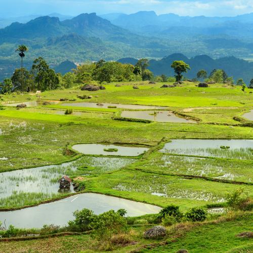 Sulawesi Adventure