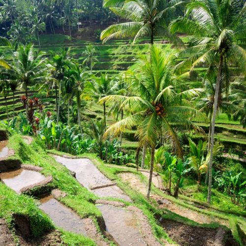 Bali - Komodo - Lombok