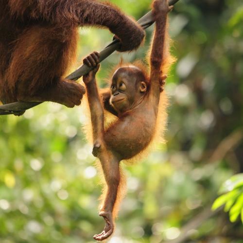 Borneo - Java - Bali