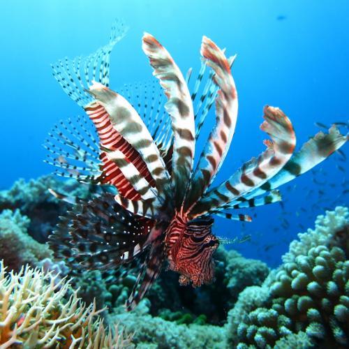 Diving & Snorkel